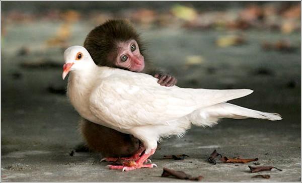 Mono y Paloma